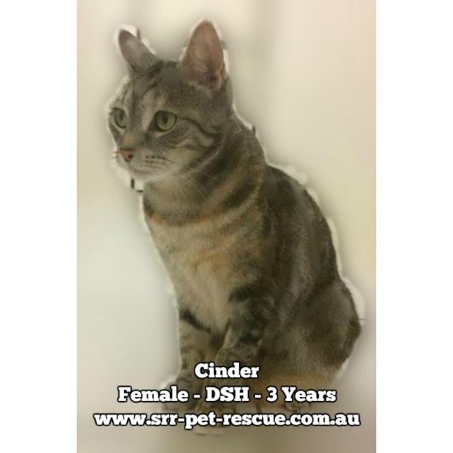 Photo of Cinder