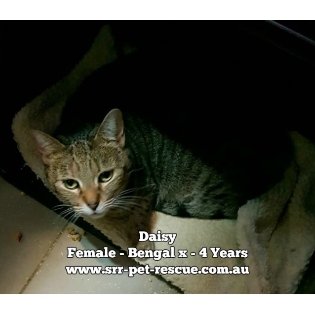 Photo of Daisy