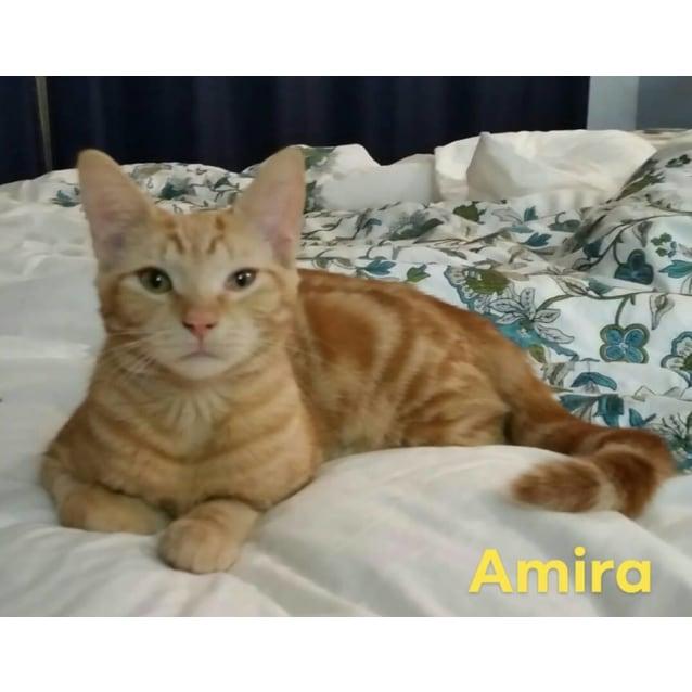 Photo of Amira