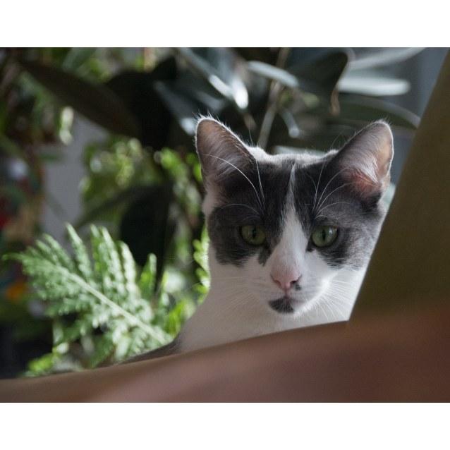 Photo of Ainsley Grey
