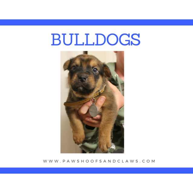 Photo of Bulldogs
