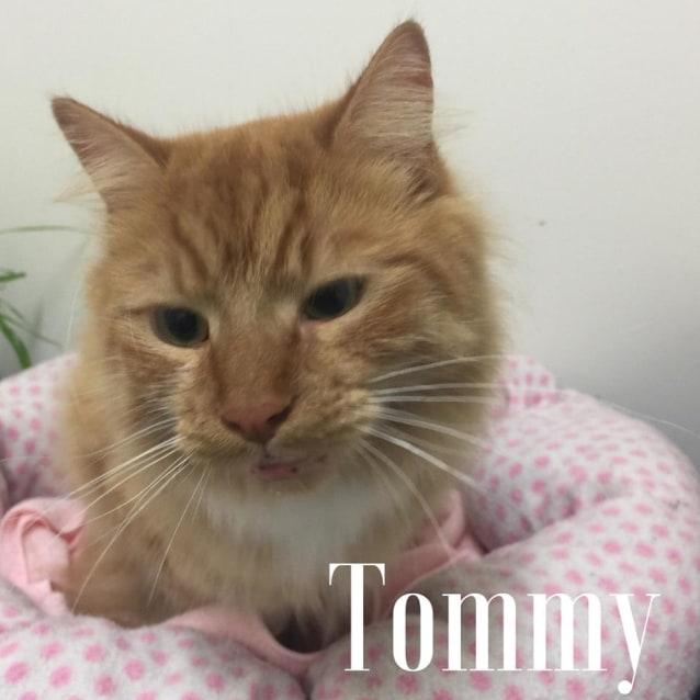 Photo of Tommy   Meet Me At Neko Hq In Preston