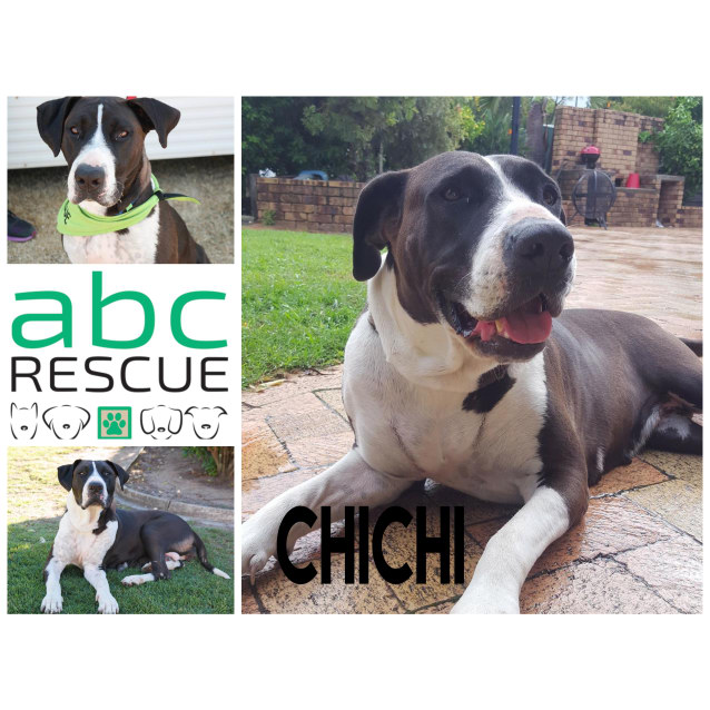 Photo of Chichi