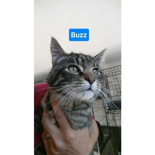 Photo of Buzz