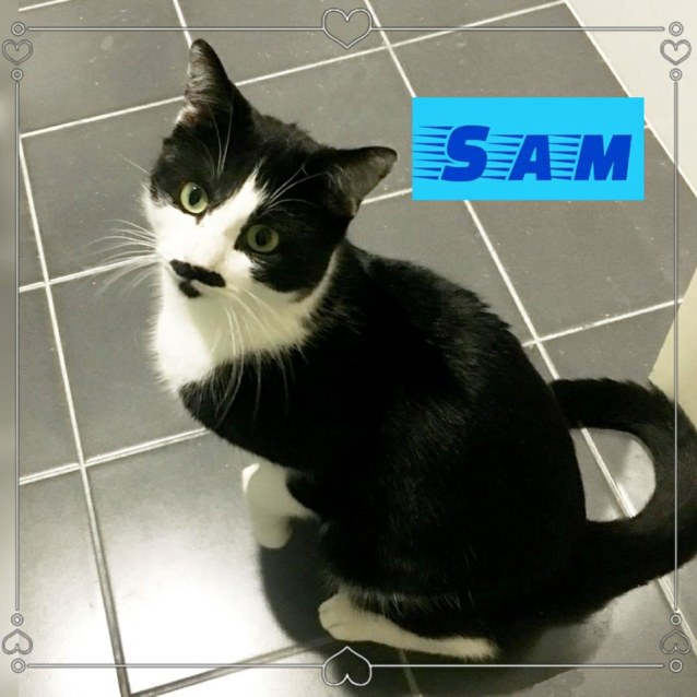 Photo of Sam