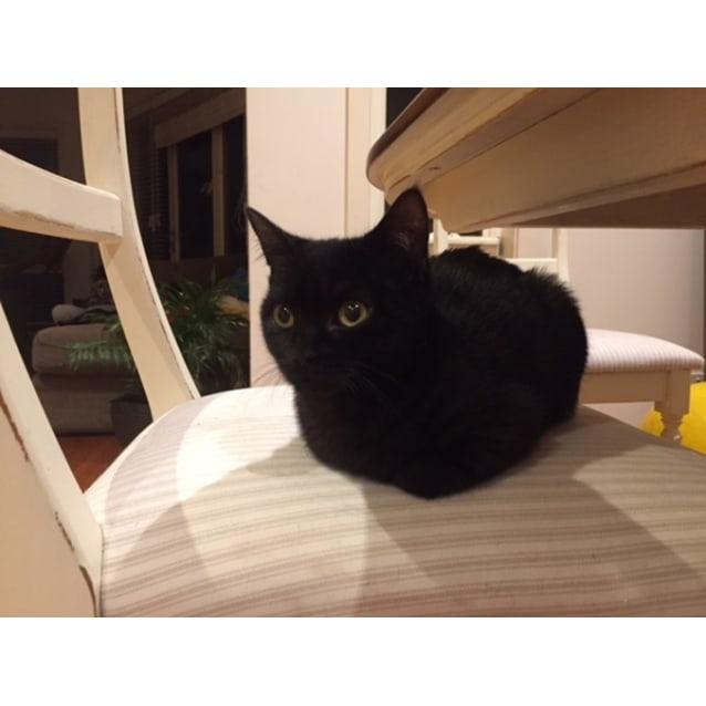 Photo of Winky (Located In Cheltenham)