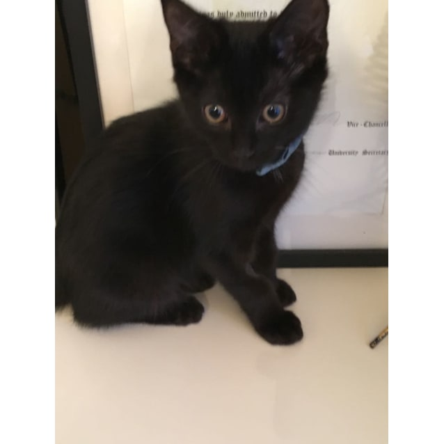 Photo of Ralph (Located In East Melbourne)