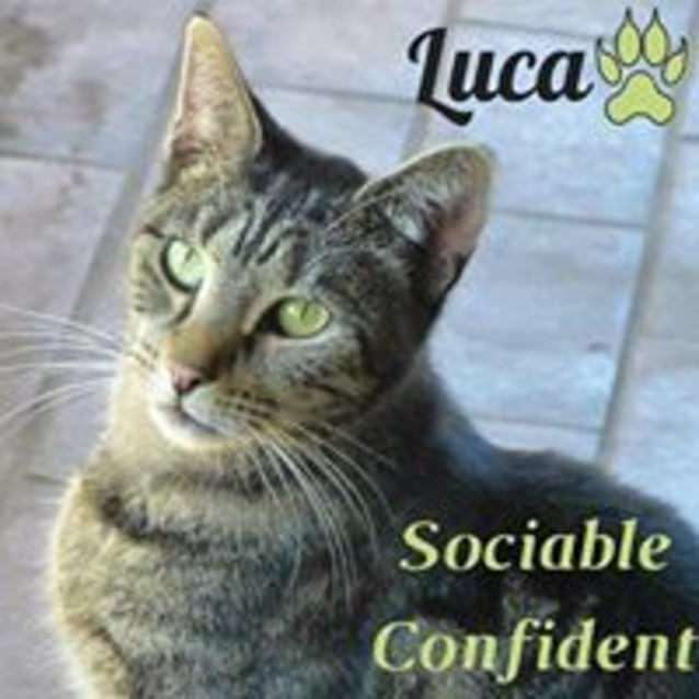 Photo of Luca