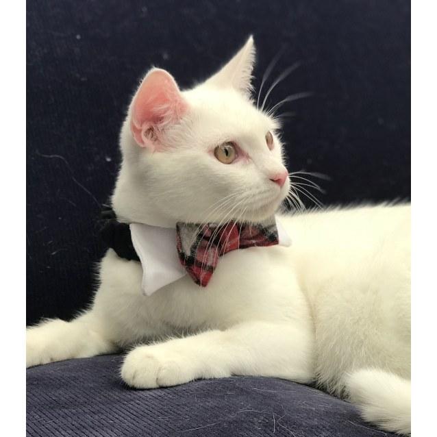 Photo of Milo 💚