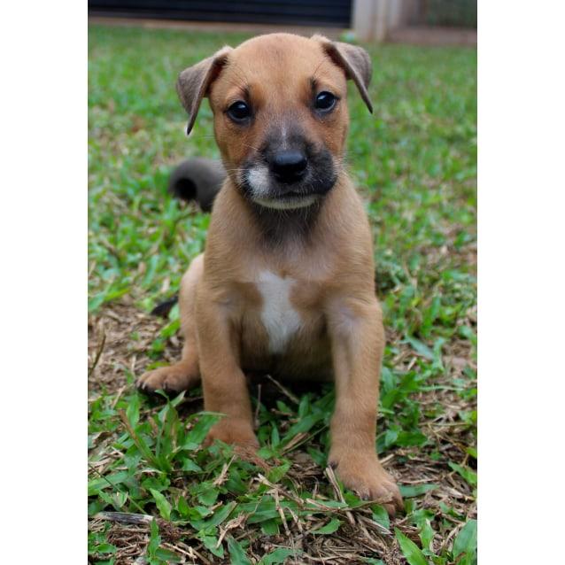 Photo of Gumball