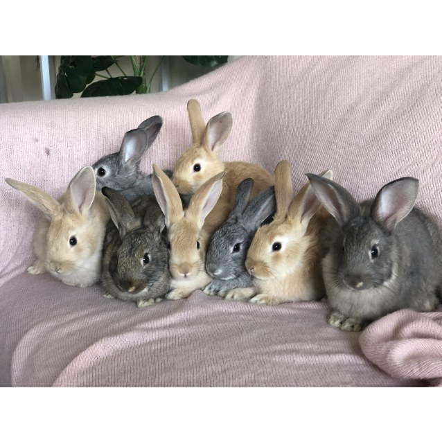 Photo of Baby Rabbits