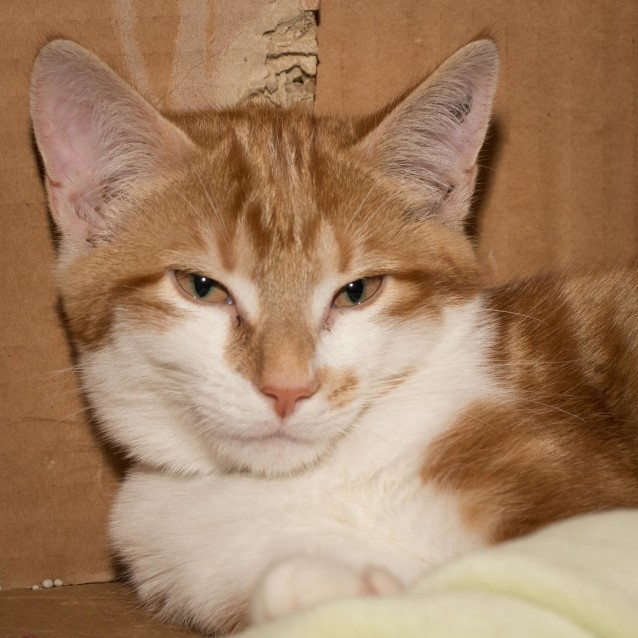 Photo of Lionel **On Trial With My New Family**