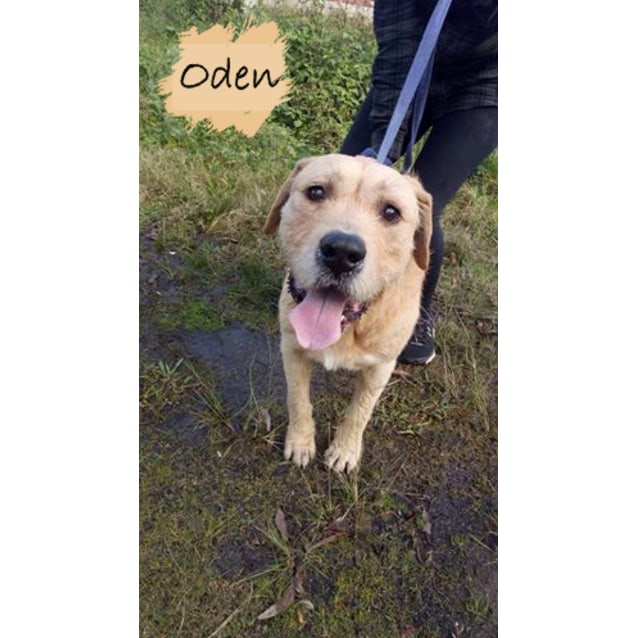 Photo of Oden