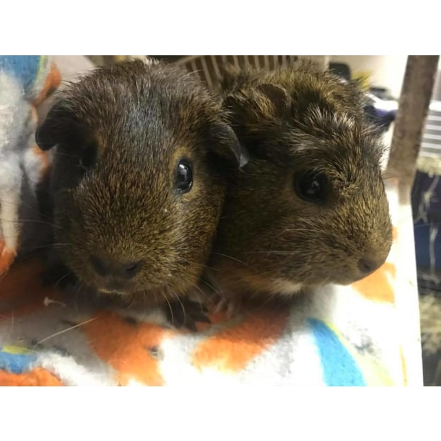 Photo of Brandy And Whiskey