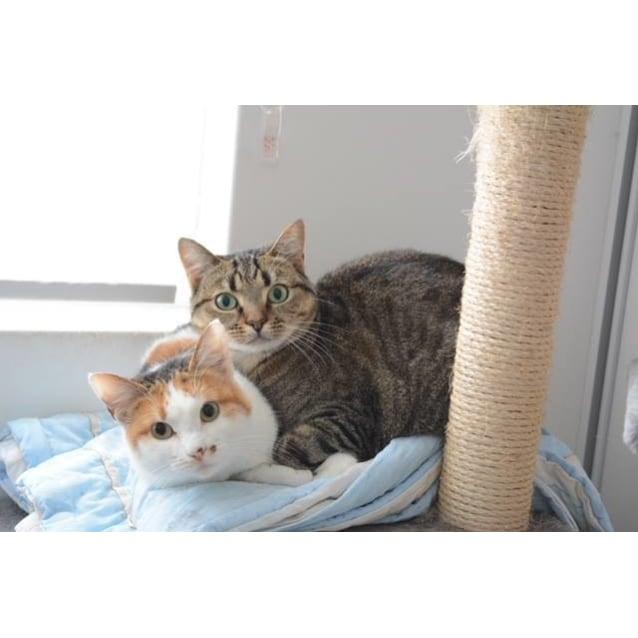Photo of Ac0561 & Ak1337   Bianca & Buffy
