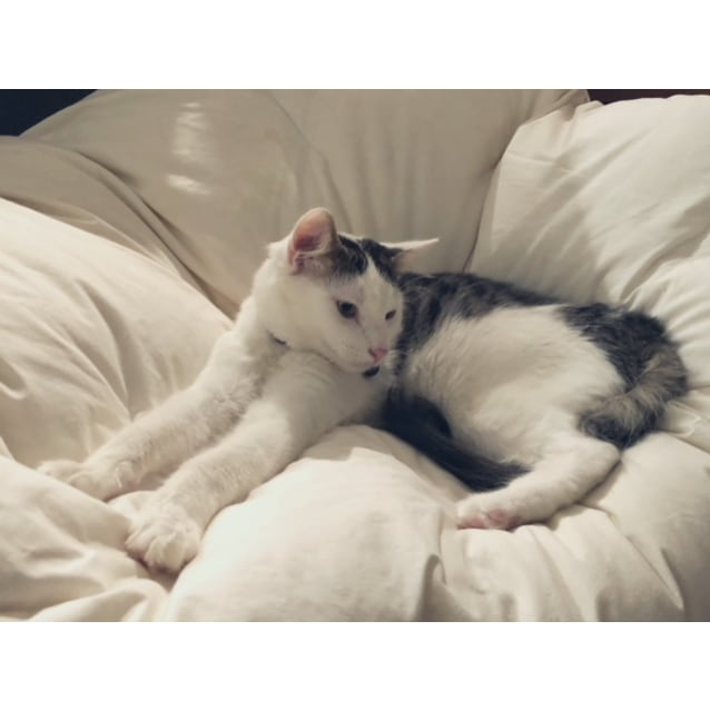 Photo of Colin ~ 6 Month Old Kitten (Relisted)