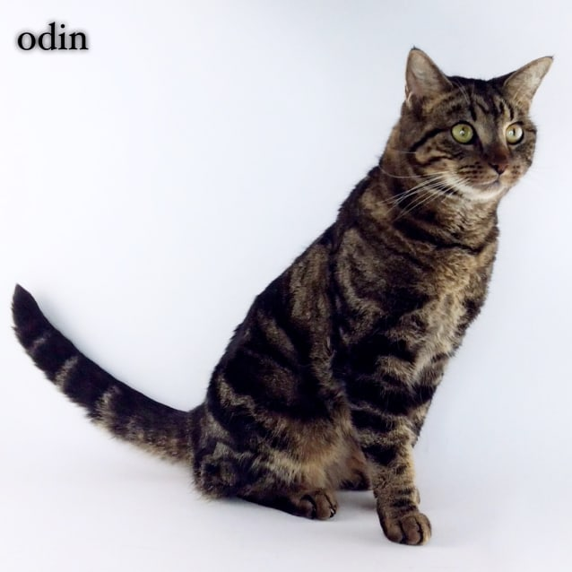 Photo of Odin