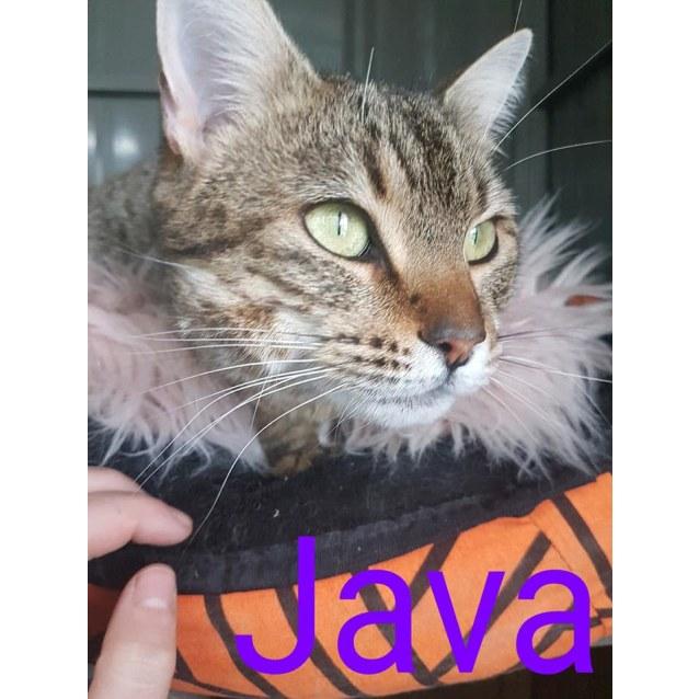 Photo of Java