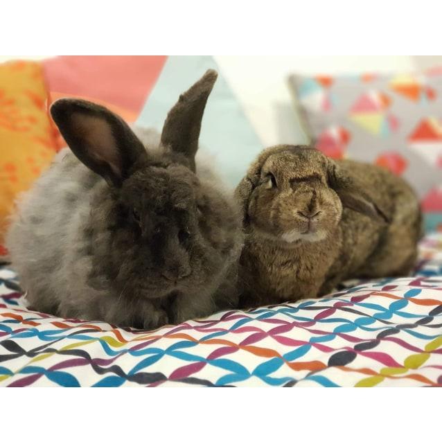 Photo of Ashton & Dianna