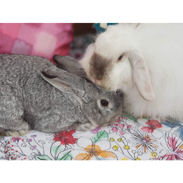 Photo of Peppa And Maxi