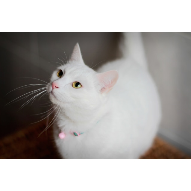 Photo of Pearl The Loyal Loving Companion Cat!