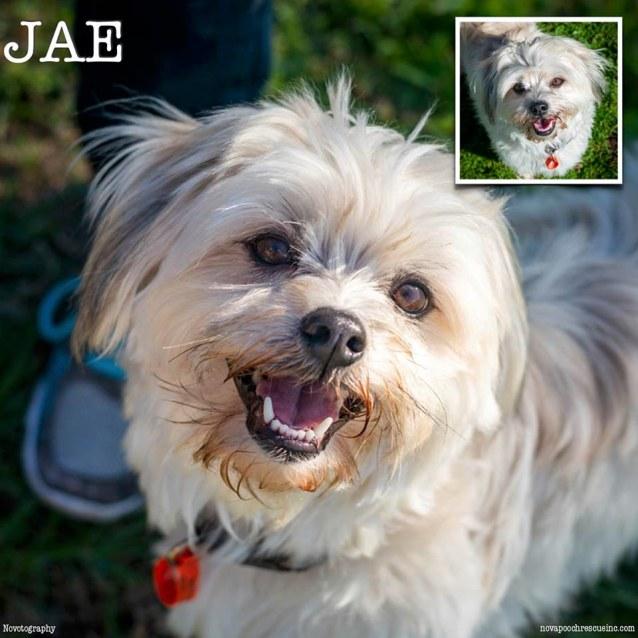 Photo of Jae