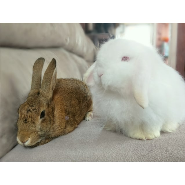 Photo of Milly & Easter