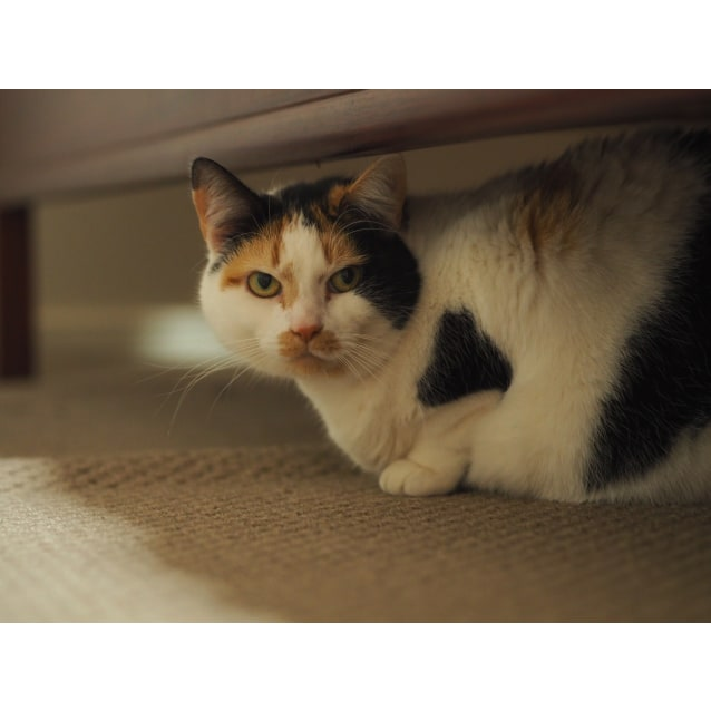 Photo of Millie (Located In Mount Waverly)