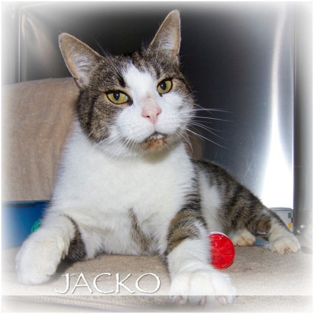 Photo of Jacko