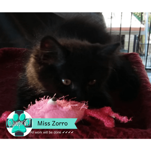 Photo of Miss Zorro