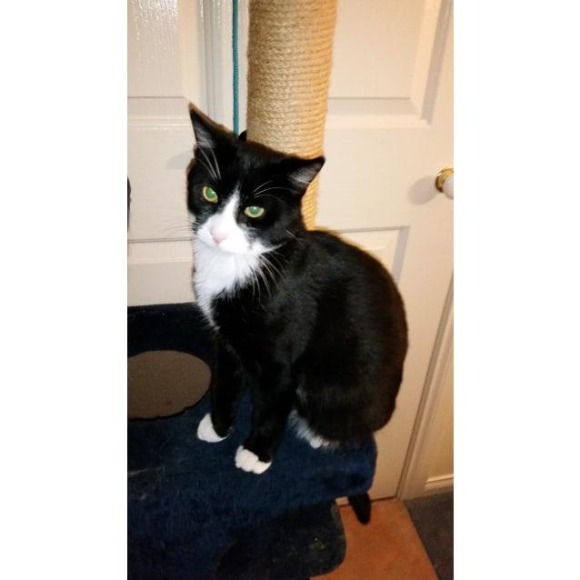 Photo of Loki   *Special Adoption Fee $100*