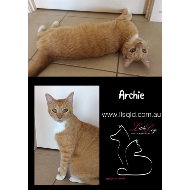 Photo of Archie