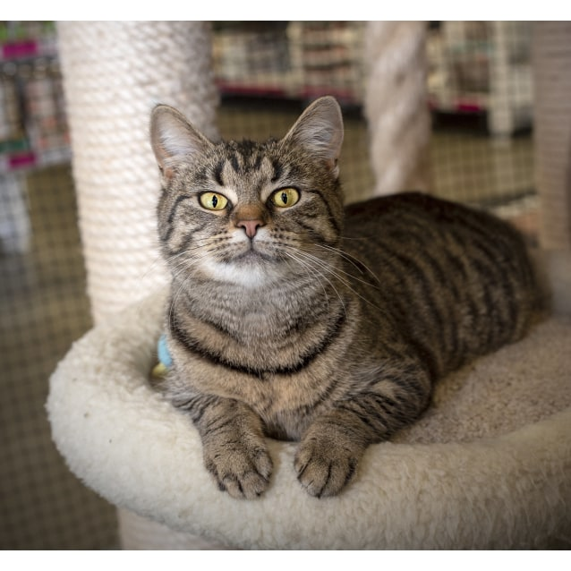 Photo of Sprinkles **On Trial With My New Family**