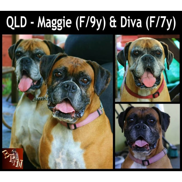 Photo of Maggie (F/10y) And Diva (F/7y)