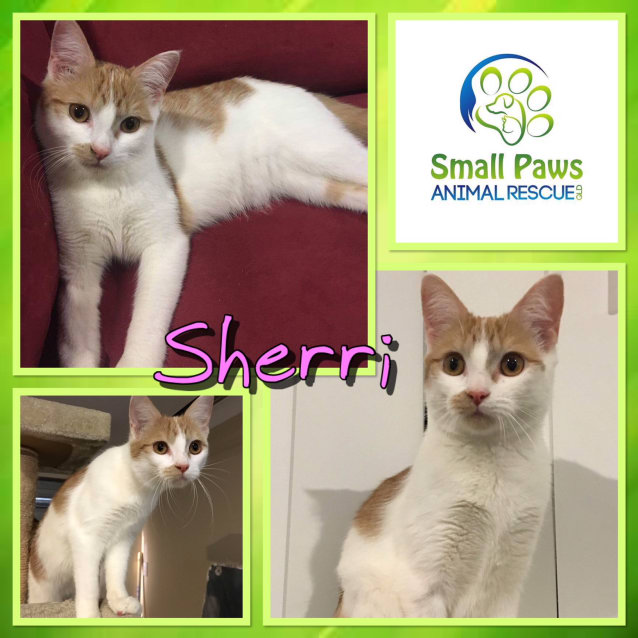 Photo of Sherri