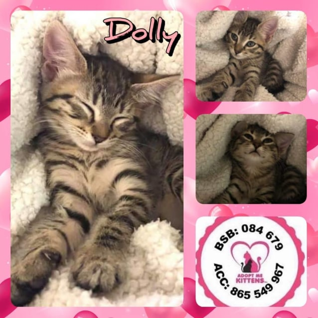 Photo of Dolly