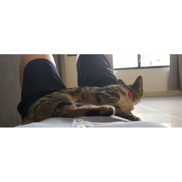 Photo of Mini