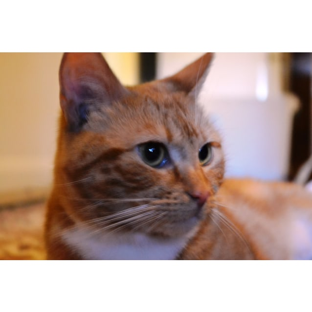 Photo of Ginger (Located In Belgrave)