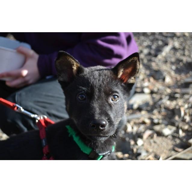 Photo of Malachite (Mali) Dingo