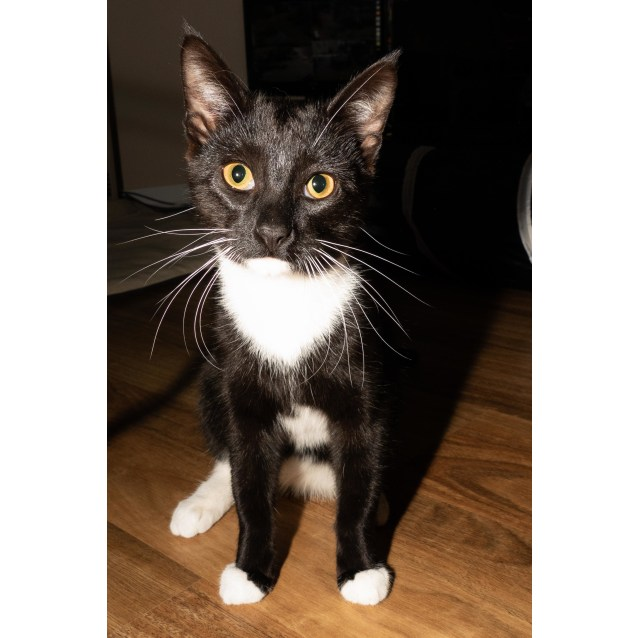 Photo of Tux**On Trial Wth My New Family**
