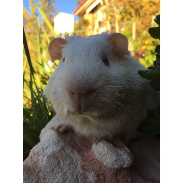 Photo of Frosty