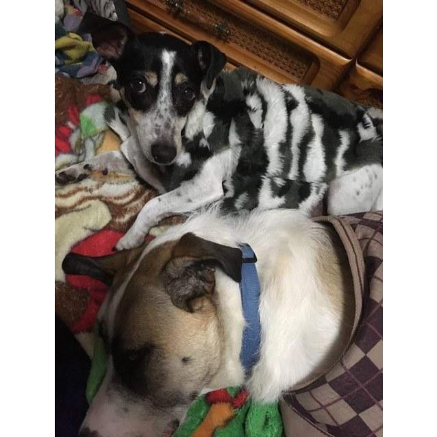 Photo of Bella & Stevie 💕 (Bonded Pair)