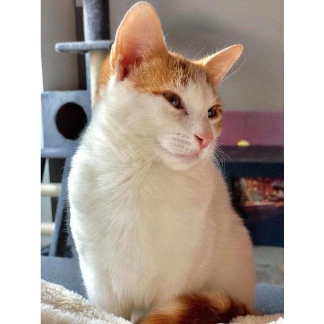 Photo of Albus (Located In Richmond)