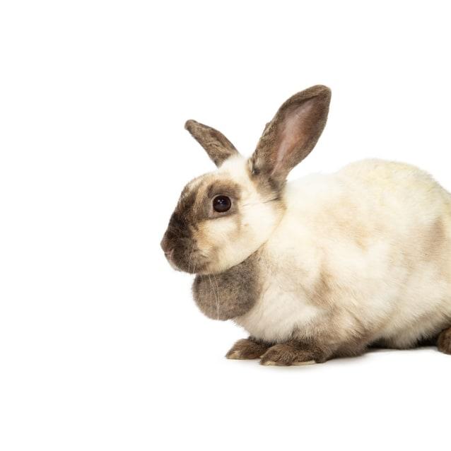 Photo of Thumbelina