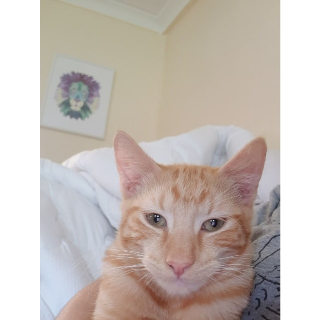 Photo of Pumpkin