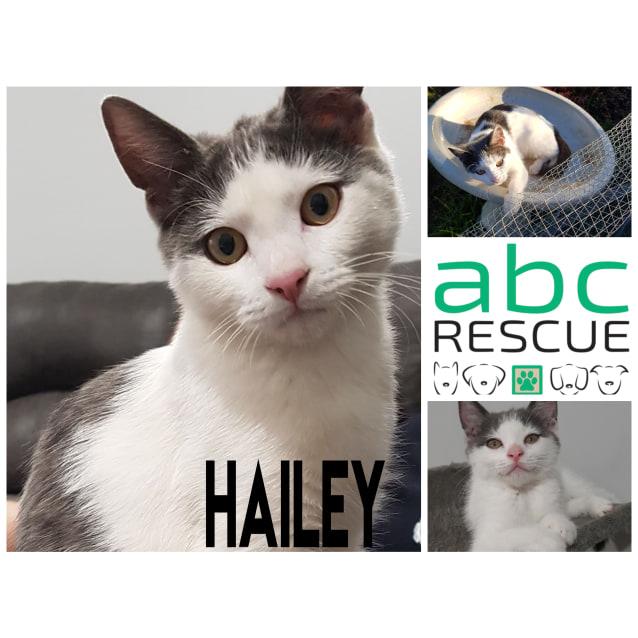 Photo of Hailey