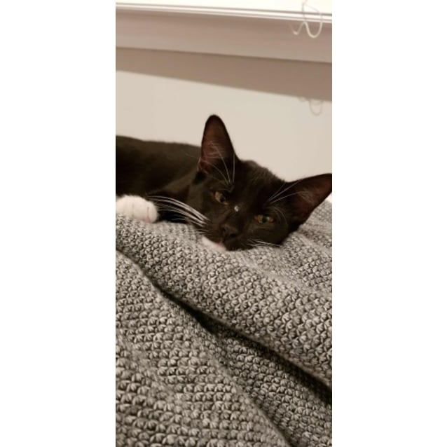 Photo of Onyx