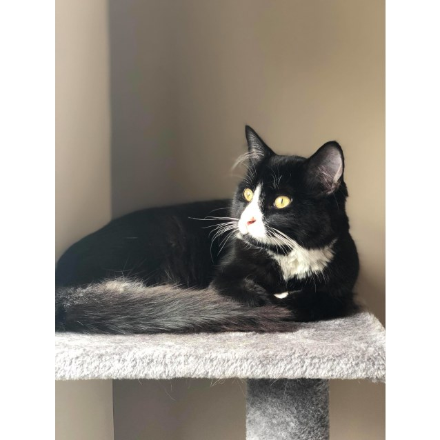 Photo of Baz (Located In Richmond)