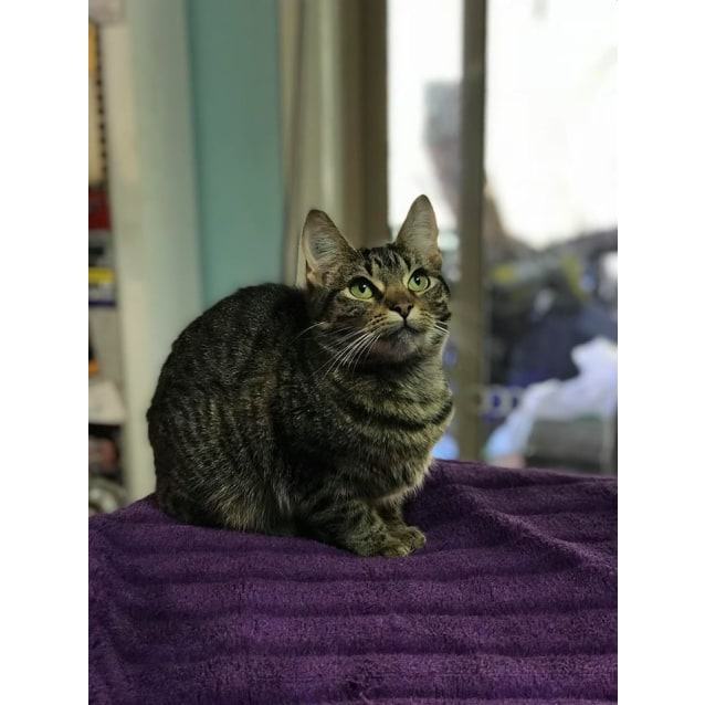 Photo of Sally (Located In Springvale South)