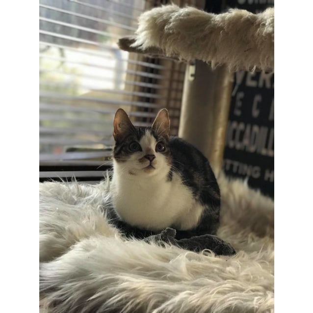 Photo of Jack (Located In Springvale South)
